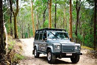 Tamborine Tracks Tours - Mt Tamborine National Park